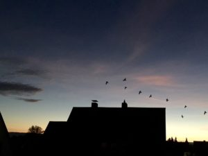 Can You Make Peace with Chimney Swifts?