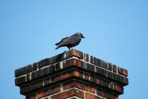 How to Keep Animals Out of Your Chimney champion chimneys